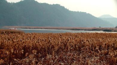 郑州旅游公司,河南旅游公司,郑州青年旅行社,韩 国芦苇群落地
