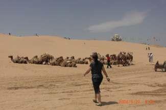 青海湖塔尔寺互助丹噶尔古城往返五日游