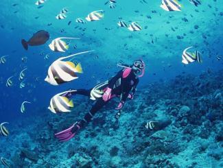 秘境海洋:海南三亚双飞五日游