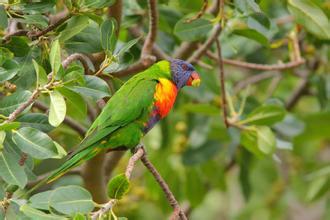 郑州中青旅,河南中青旅,郑州旅行社,新 西兰蒂里蒂里马唐基岛美丽的小鸟