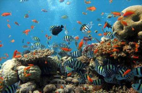 郑州旅行社,河南旅行社,郑州中青旅,新 西兰凯利塔顿海底世界