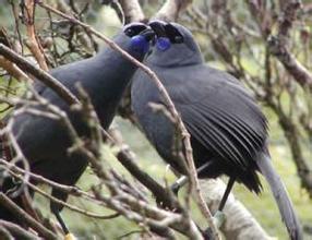 郑州中青旅,郑州旅行社,河南旅行社,新 西兰边界溪流的小鸟