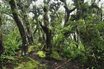 郑州青旅,河南青旅,郑州中青旅,新 西兰精灵森林