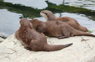 郑州青旅,郑州中青旅,河南青旅,新 西兰惠灵顿动物园