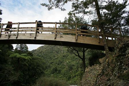 郑州青旅,郑州中青旅,河南中青旅,新 西兰瑞姆塔卡森林公园