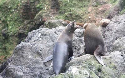 郑州青旅,郑州中青旅,河南中青旅,新 西兰卡皮蒂海洋保护区