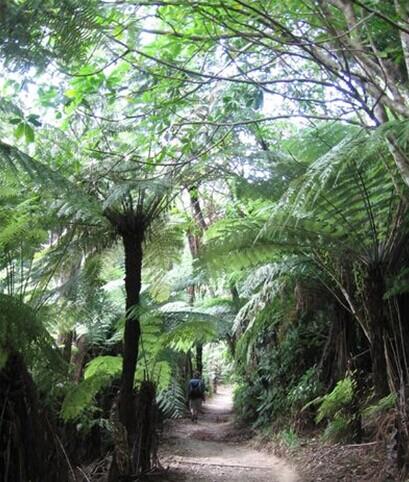 郑州青旅,郑州中青旅,河南中青旅,新 西兰夏洛特女王步行道