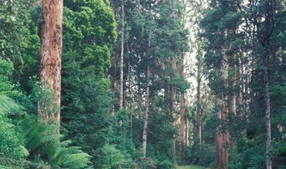 河南中青旅,河南青旅,河南旅行社,新 西兰克雷格本自然保护区