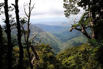 河南旅行社,郑州中青旅,河南青旅,新 西兰卡胡朗伊国家公园