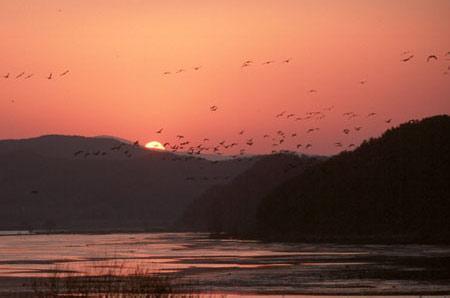郑州旅游公司,河南旅游公司,郑州青年旅行社,韩 国牛浦生态公园