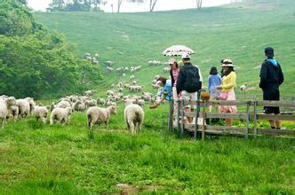 郑州旅游公司,河南旅游公司,郑州青年旅行社,韩 国大关岭羊群牧场