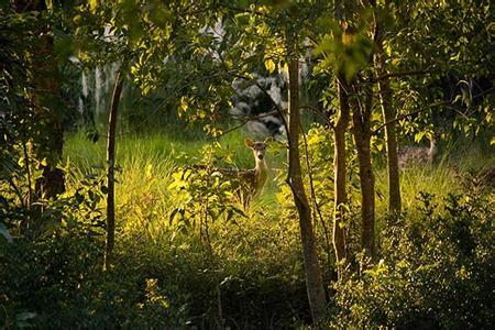 河南青旅,郑州旅行社,孟加拉国