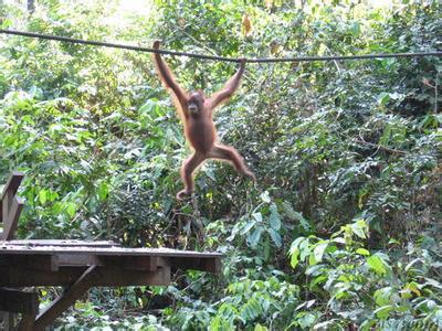 郑州旅游公司,河南旅游公司,郑州青年旅行社,沙 巴 西必洛猿人保护区