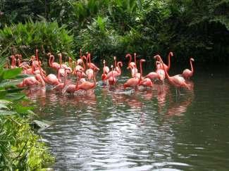 郑州旅游公司,河南旅游公司,郑州青年旅行社,新加 坡裕廊飞禽公园