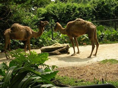郑州旅游公司,河南旅游公司,郑州青年旅行社,新加 坡动物园