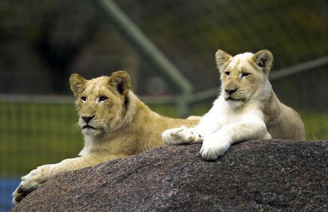 郑州旅游公司,河南旅游公司,郑州青年旅行社,多伦多动物园