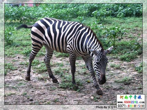 北京动物园-河南省中国青年旅行社(官方网站)